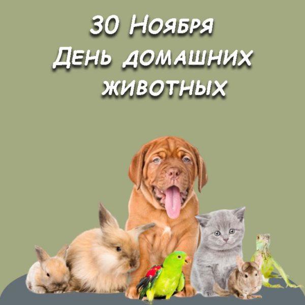 картинка ко дню домашних животных